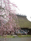 20060401_hiyoshi
