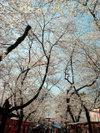 20060407_hirano002