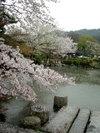 20060410_maruyama003