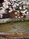 20060410_shirakawa001