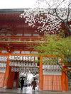 20060410_yasaka