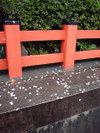 20060410_yasaka002_1