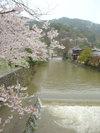 20060412_nakanoshima001