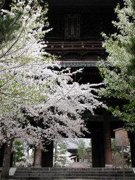 20060413_kurodani001