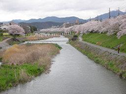 20060414_kamogawa001