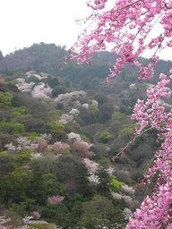 20060415_arashiyama