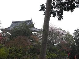 20060415_yoshimine001
