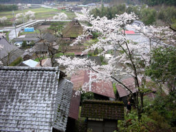 20060416_hiyoshi001