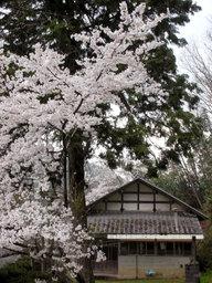 20060416_hiyoshi002