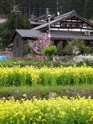 20060422_ohara002