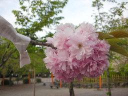20060428_maruyama002