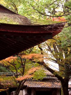 20061126_shimogoryo