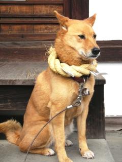 20070101_dog