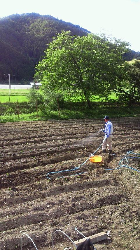 丹波の黒豆の畑