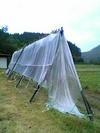 20051117_kuromame