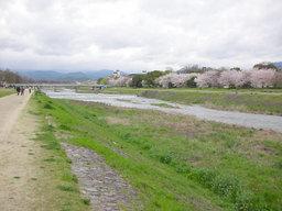 20060414_kamogawa004