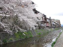 20060414_kamogawa005