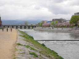 20060414_kamogawa006