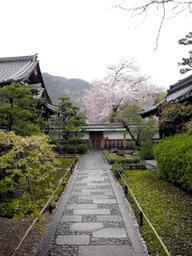 20060415_tenryuji001