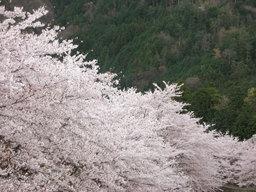 20060416_nanatanigawa001