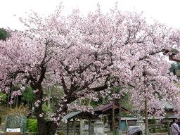 20060430_hyakunen001